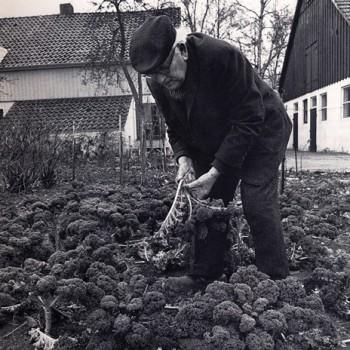 Wilhelm Kaisen im Ruhestand 1976